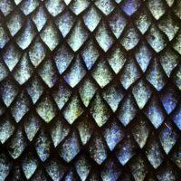 Écailles de dragon turquoise